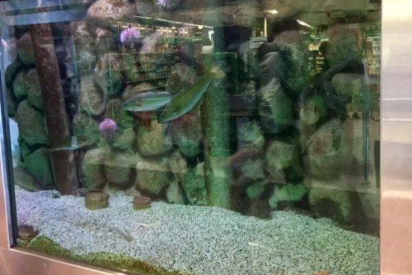 Saltvannsakvariet